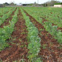 azienda-agricola-salento (1)