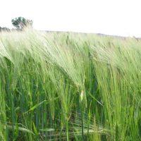 azienda-agricola-salento (2)